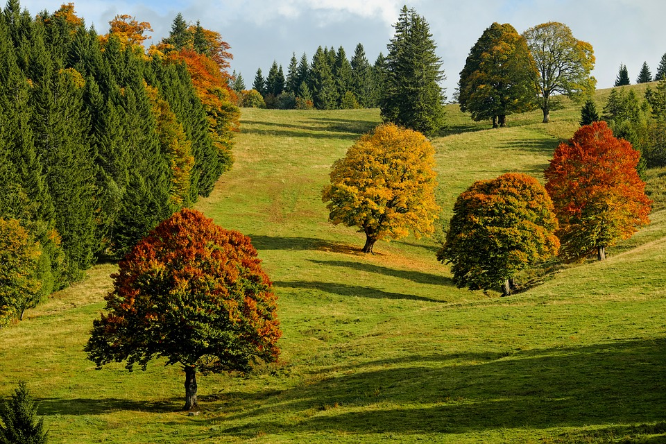 September Fall Foliage
